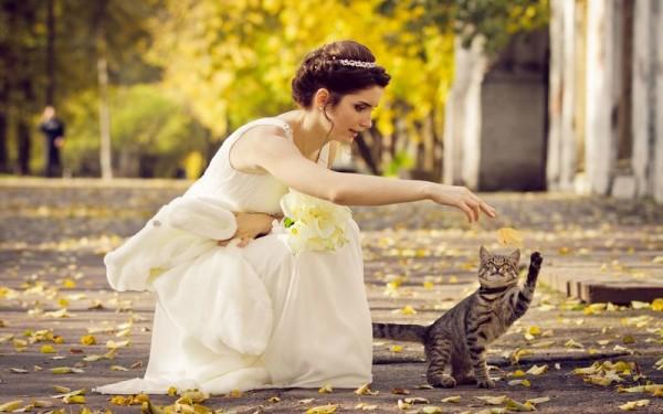 невеста с котом
